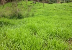 Fazenda/Sítio com 2 Quartos à venda, 100m²